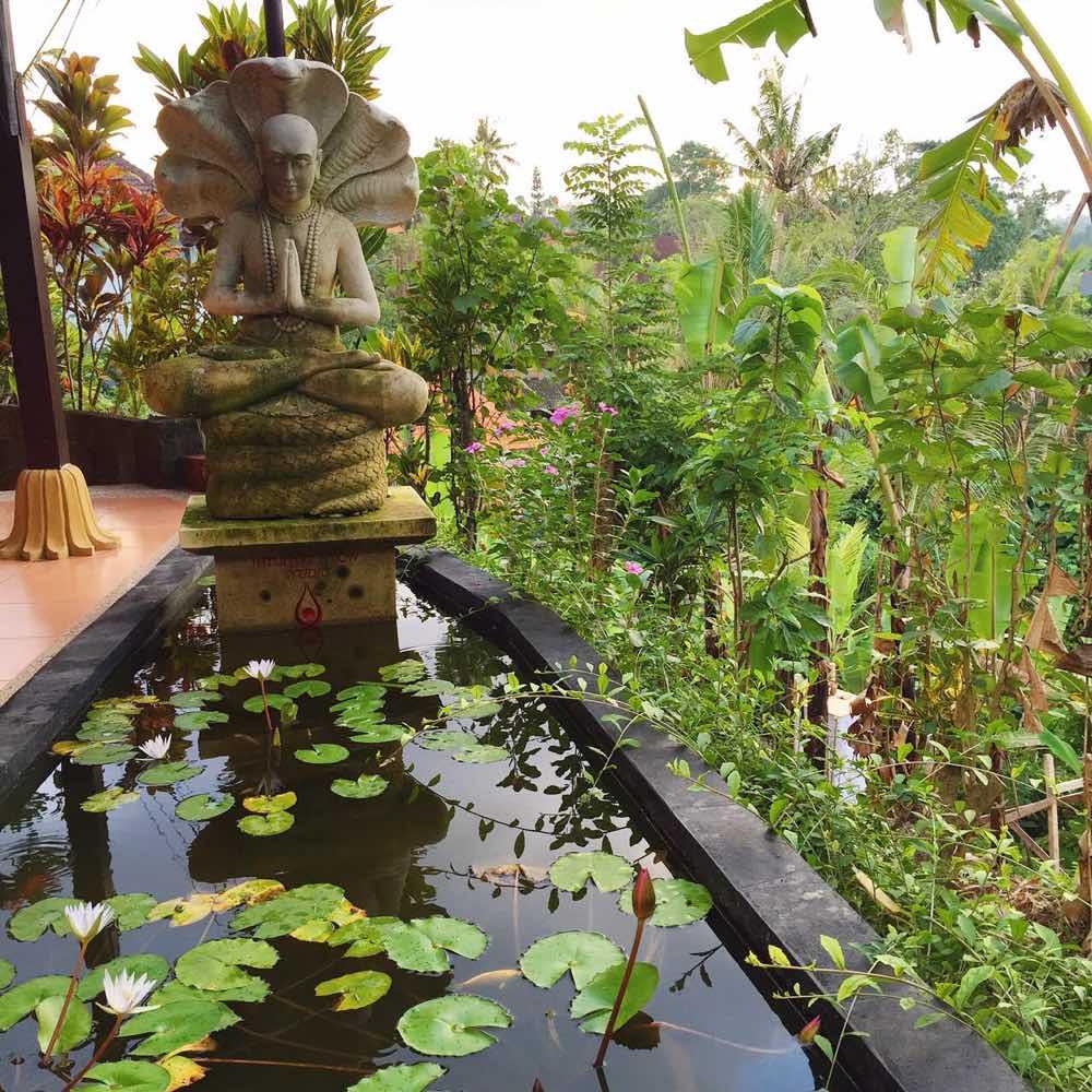 ubud lily pad life curator-1000px