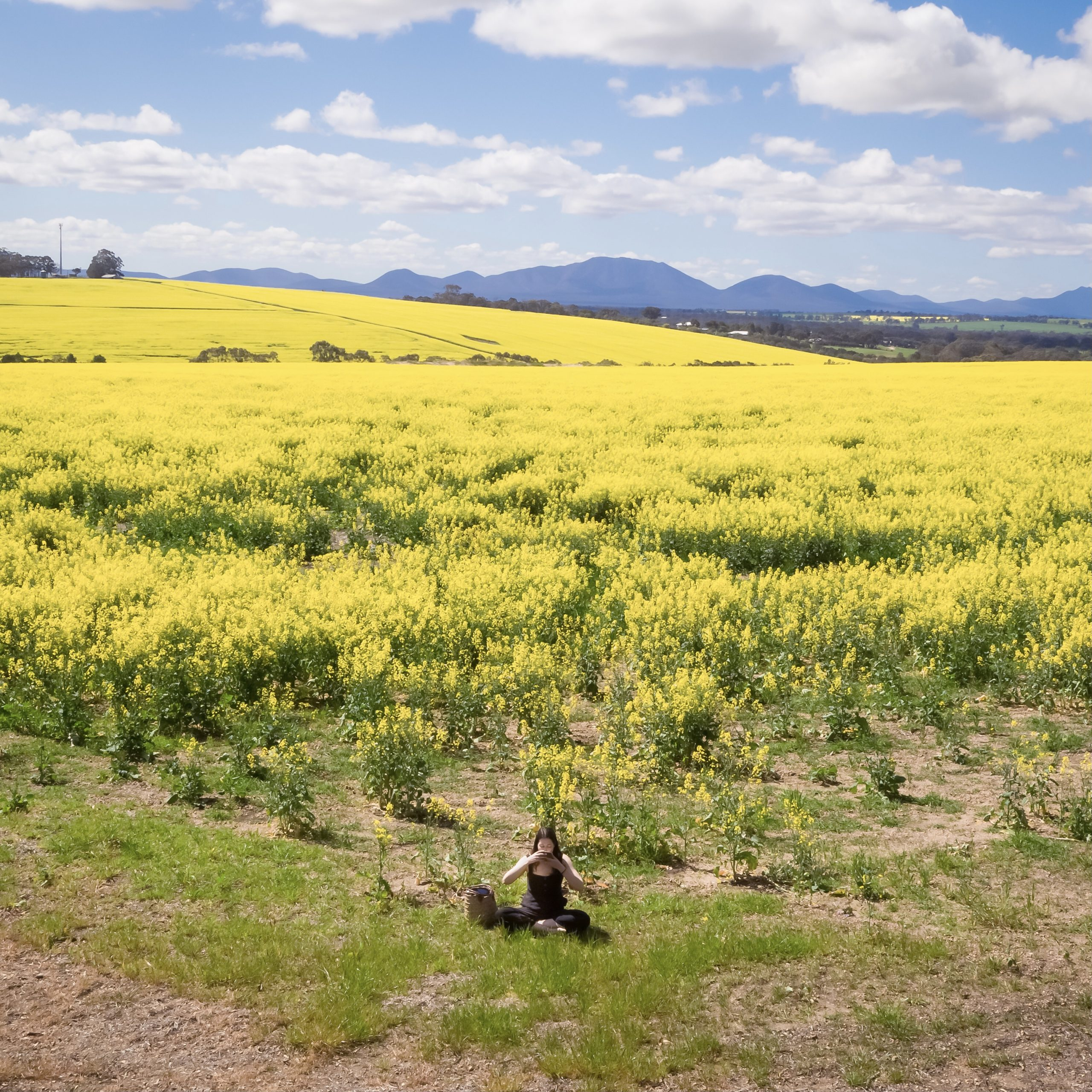 Person drinking Tea In A Canola Field